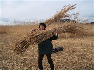 2005_0123葦刈り0054_R_R